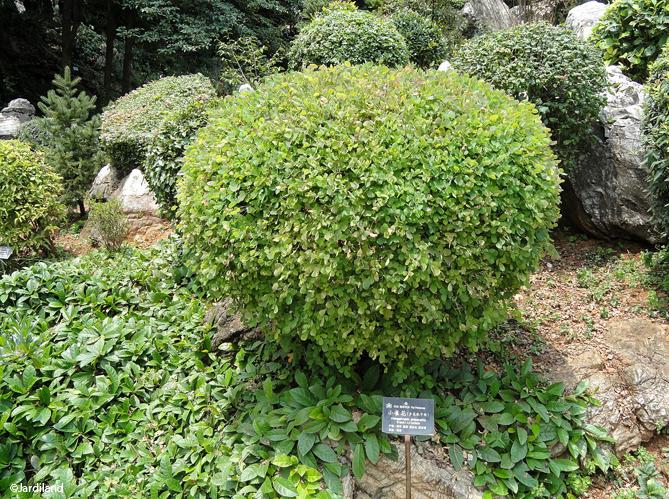 Courson les 10 arbres et arbustes de l ann e elle for Arbuste de decoration exterieure