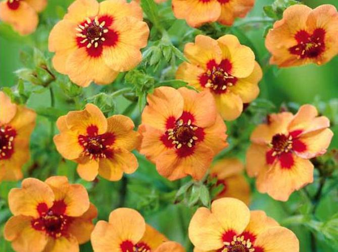 5 Fleurs Pas Ch Res Planter En Hiver Elle D Coration
