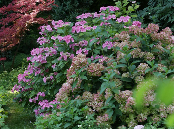 5 beaux massifs fleuris qui durent au fil des saisons elle d coration - Deco massif exterieur ...
