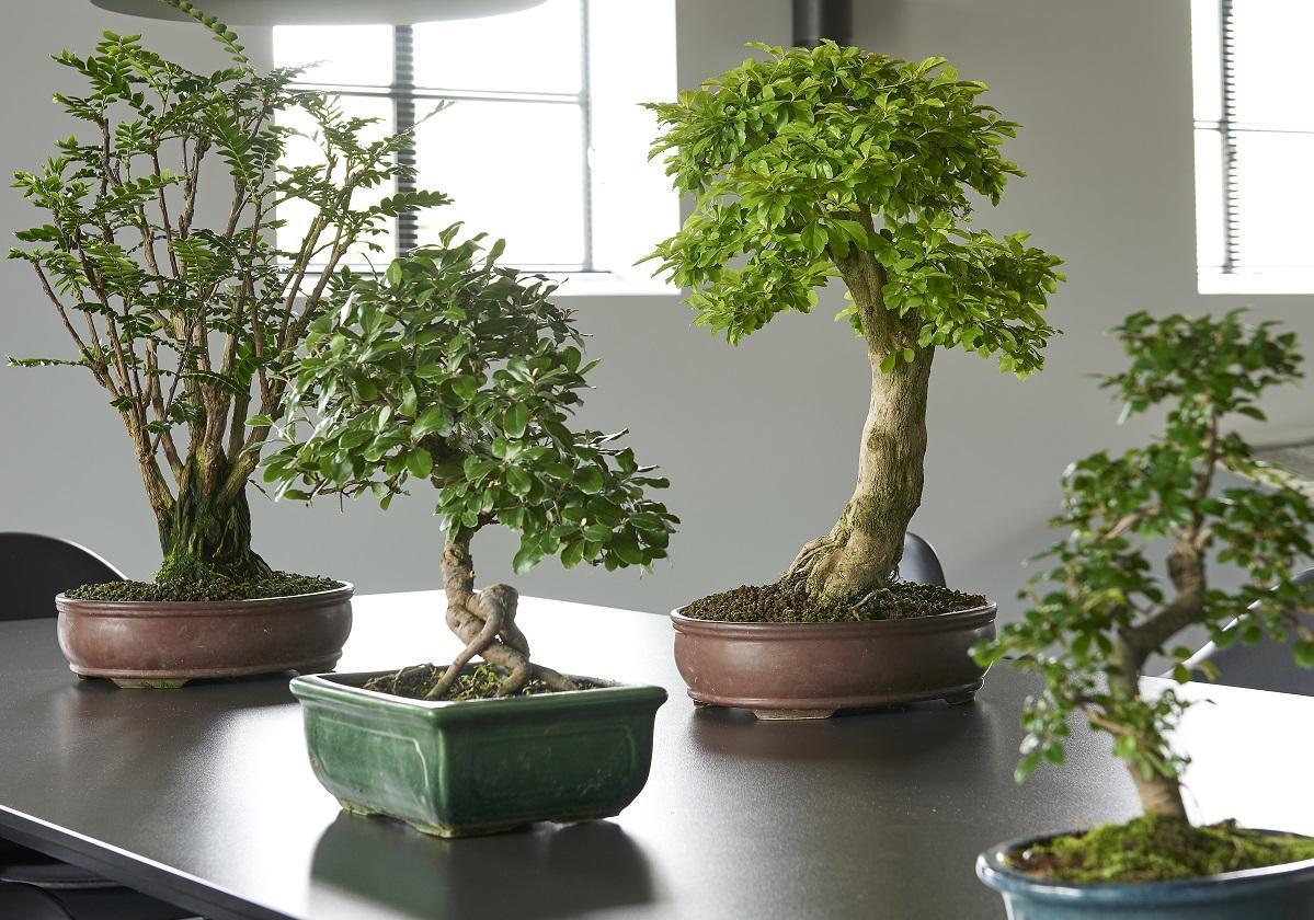 Plantes japonaises jardin de plantes vivaces avec for Plante japonaise exterieur