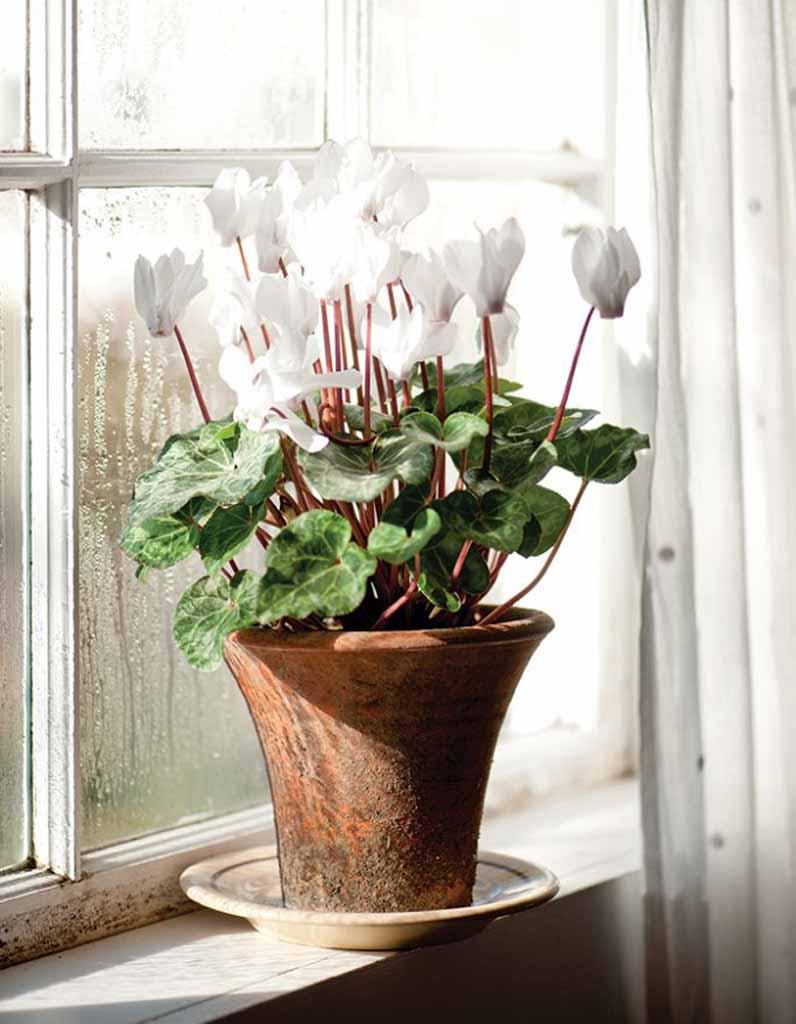 Plante d 39 hiver nos 12 plantes pr f r es elle d coration for Plantes exterieur hiver