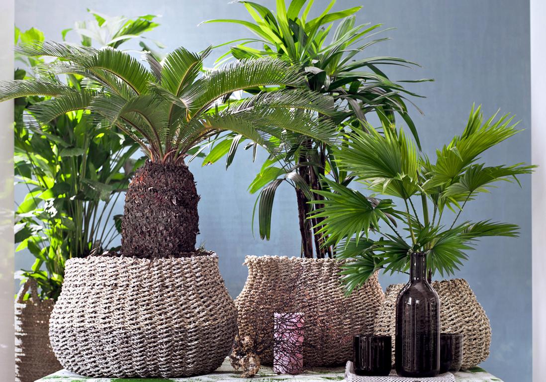 quelle exposition pour ma plante d int rieur elle d coration. Black Bedroom Furniture Sets. Home Design Ideas