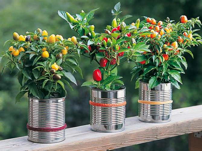 Je veux un potager sur mon balcon elle d coration - Jardin sur un balcon ...