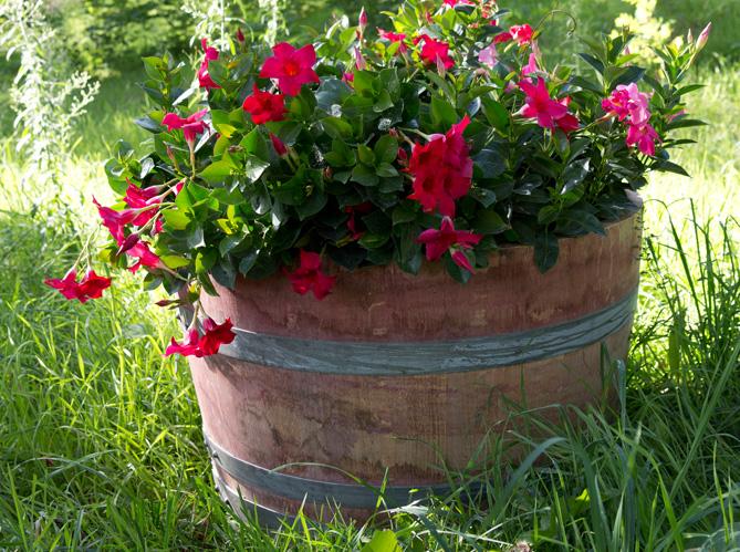 Pots et jardini res habillent la terrasse et le jardin elle d coration - Leroy merlin jardiniere ...