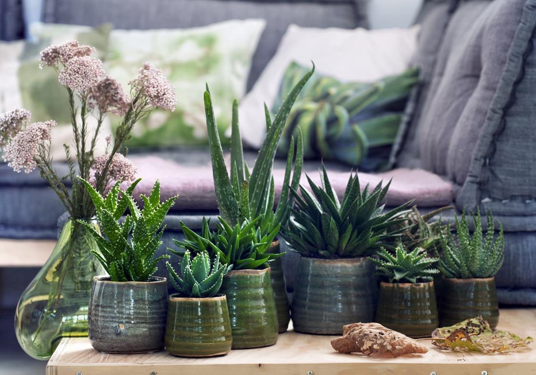 6 Plantes Increvables Pour Celles Qui N Ont Vraiment Pas La Main Verte Elle D Coration