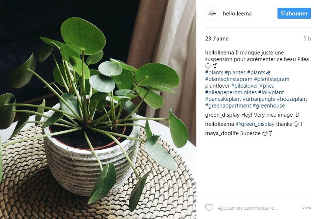 Plantes Tendance Sur Instagram Top 5 Des Plantes Les