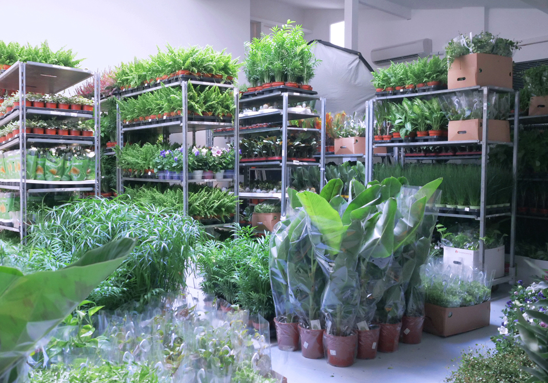 Vente de plantes xxl les 4 et 5 novembre du green 2 for Plante 1 euro paris