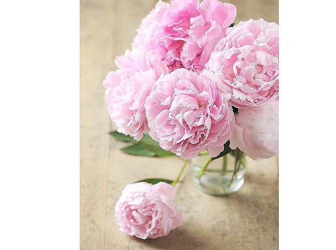 et les fleurs pr f r es des ellenautes sont elle d coration. Black Bedroom Furniture Sets. Home Design Ideas