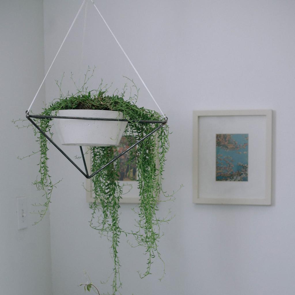 tendance les plantes prennent de la hauteur elle d coration. Black Bedroom Furniture Sets. Home Design Ideas