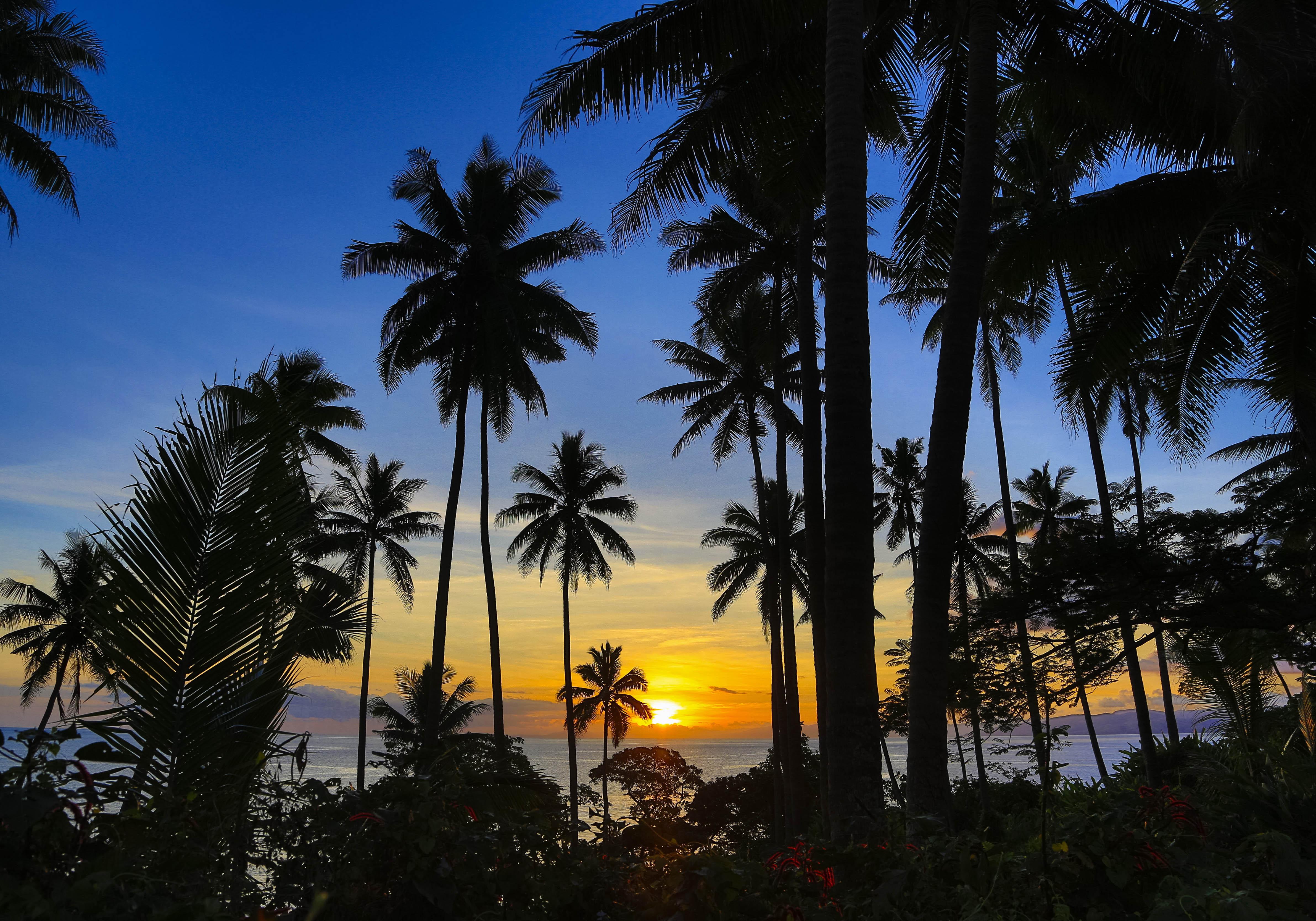 Iles fidji les dix meilleurs endroits des les fidji elle - Photos de toutes sortes de palmiers ...
