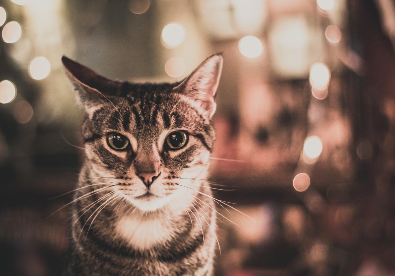 chat en france
